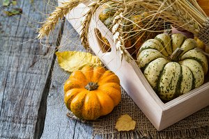 Selection of pumpkins, wheat