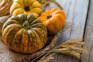 Selection of pumpkins, wheat
