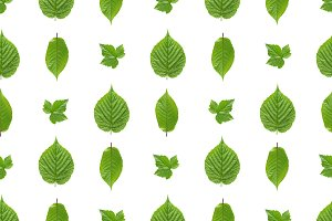 Seamless pattern of green leaves