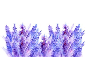 Watercolor lavender floral pattern