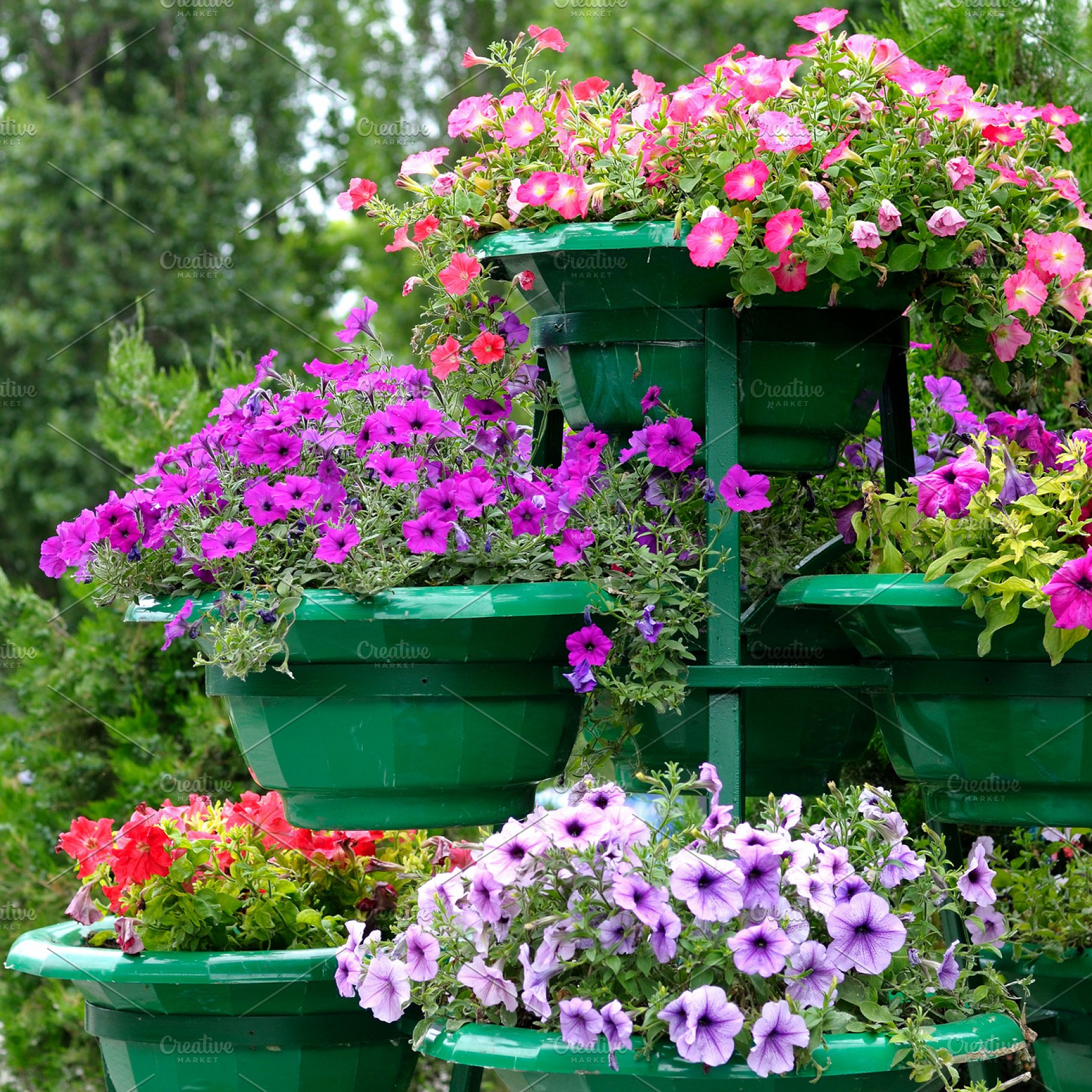 Petunia Flowers In Pots High Quality Nature Stock Photos