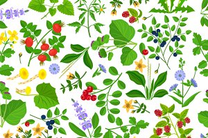 Wild herbs seamless pattern
