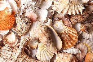 Lot of seashells