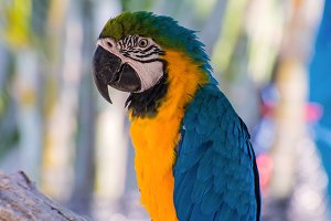 Parrot macaw beautiful