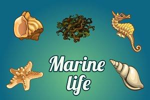 Seashells, seaweed and seahorse