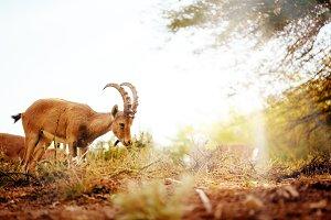 Wild animal in wonderful forest