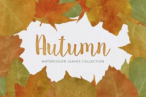 Watercolor Autumn & Fall Leaves