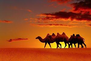 Desert fantasy