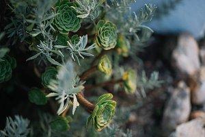 stone flowers green life