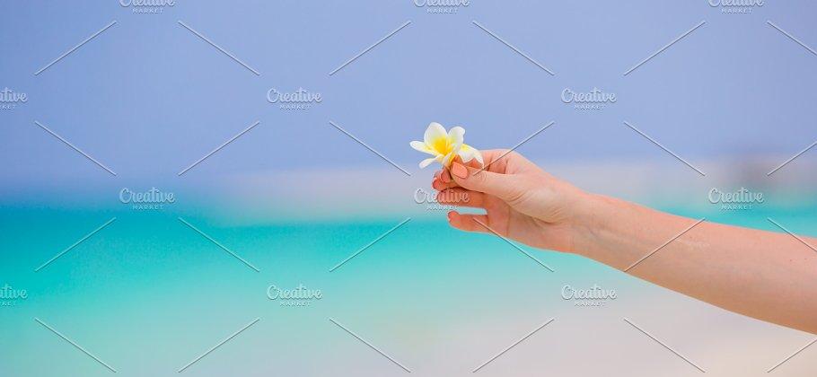 Beautiful frangipani flowers background turquoise sea on white beach beautiful frangipani flowers background turquoise sea on white beach people mightylinksfo