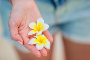 Beautiful frangipani flowers in female hands background turquoise sea on white beach