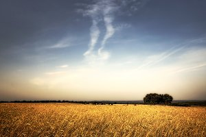 Spanish fields