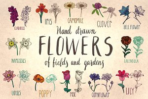 Hand drawn flowers of fields&gardens