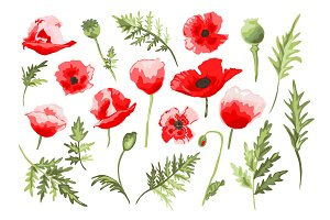 Red Poppy Floral Clip Art