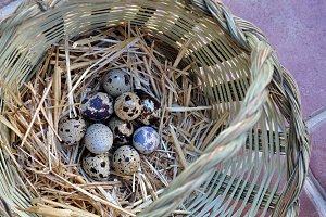 basket with quail eggs