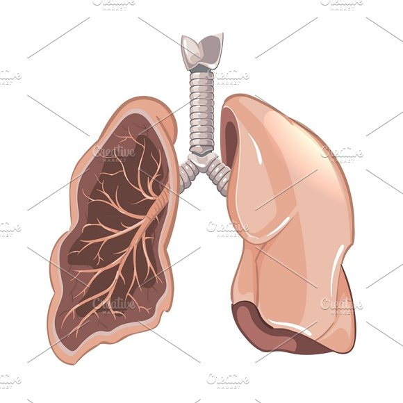 Cancer Lungs Anatomy Illustrations Creative Market