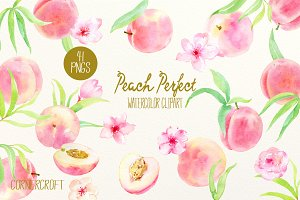 Watercolor Clipart Peach Perfect