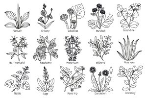 Medicine plants and herbs