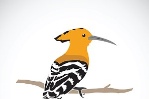 Vector of hoopoe