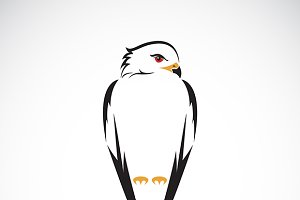 Vector of owl design.