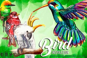 Exotic birds watercolor clip art