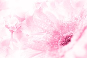 Sweet pink flower background