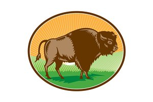 American Bison Oval Woodcut