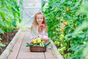 Adorable little girl harvests cucumbers and tomatoes in greenhouse. Season of ripening vegetables in green houses.