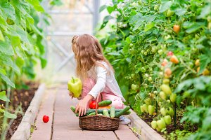 Little girl in greenhouse with basket full of harvest. Time to harvest. Big basket full of vegetables