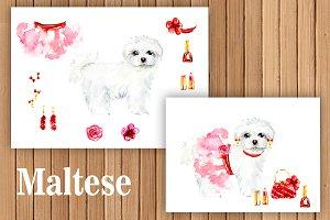 Maltese dog.