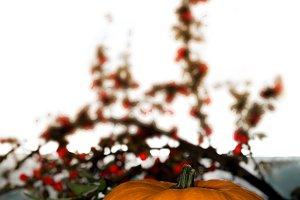 Pumpkin and branch of rowan berries