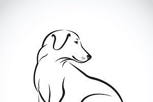 Vector of dog labrador.