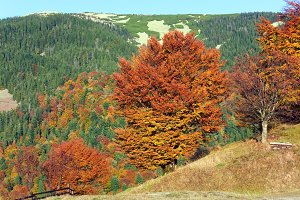 Autumn Carpathian mountain, Ukraine