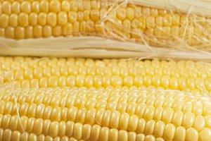 Corn cobs (maize)