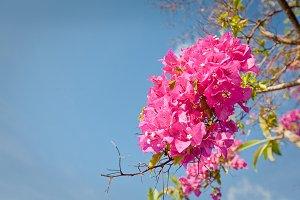 asian flower on Bali island
