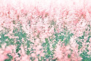 Soft Pink meadow