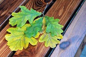 Oak leaves on wooden boards