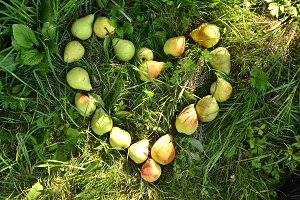 Heart made from pears