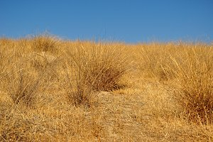 dried bushes in dry meadow