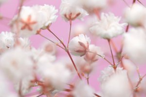 White flower on pink