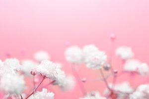White flower on pink