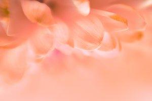 soft flower background