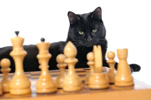 Black cat lies near the chessboard