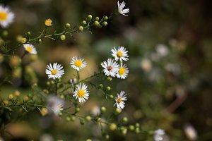 Roadside wildflowers