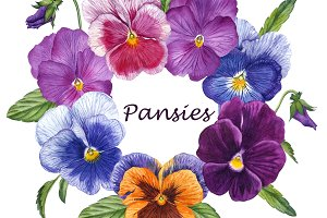 The summer set pansies