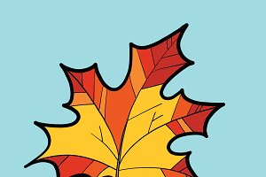 Maple red leaf, nature autumn season