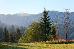 Summer Carpathian mountains