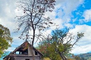wooden rotten barn in mountain