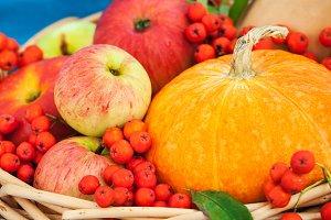 Autumnal pumpkin, apples and rowan