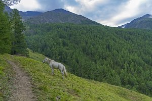 White horse on the mountainside.